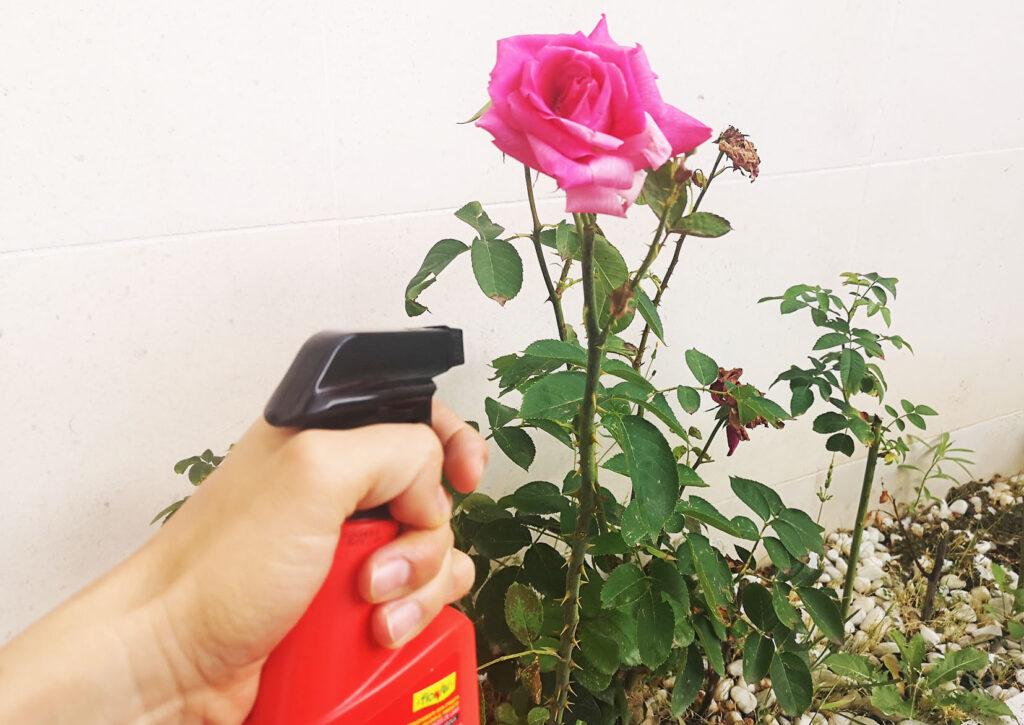 Insecticidas para plantas flower